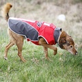 Cool Dog Waterproof Dog Coat K9 Red 3