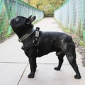 Black Cotton Webbing Dog Collar 4