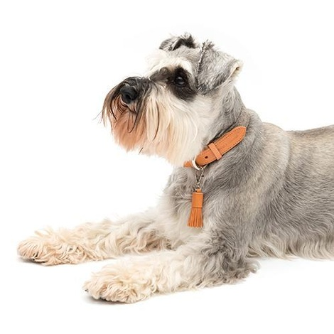 Camello Leather and Grey Tweed Dog Collar 4
