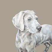 Paint My Dog  - Weimaraner Medium Art Print