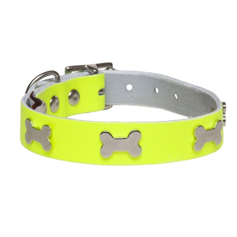 Galaxy Dog Collar - Yellow, Nickel Bones