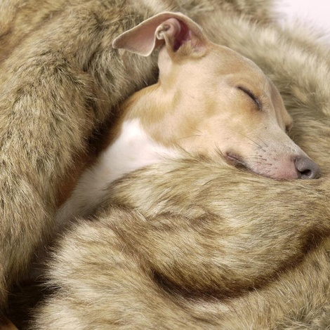 Faux-Fur & Fleece Dog Blanket - Foxy