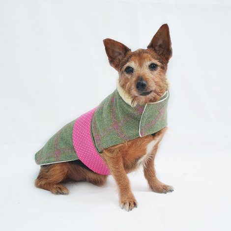 Raspberry Tweed Dog Coat 2