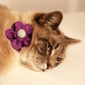 Bloom Cat Collar Flower Accessory - Lavender & Duck Eg 4