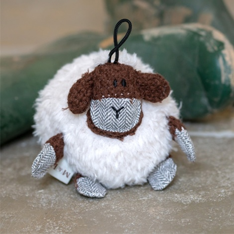 Shelby sheep 4