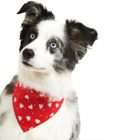 Patchwork Hearts Dog Bandana