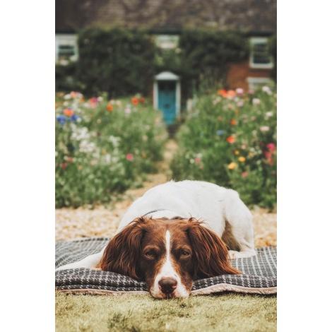Dog Blanket - Fabric and sherpa wool - Ascot 4