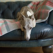 The Lounging Hound - Waterproof Wool Throw - Flamingo