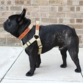 Tan Brown Cotton Webbing Dog Harness 2