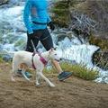Front Range™ Dog Harness Alpenglow Pink 7