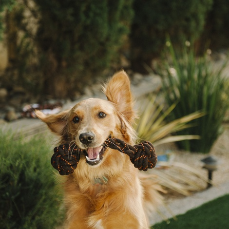 Scout & About Barbell Rope Dog Toy 5