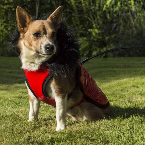Brighton Bubble Hoodie Dog Coat - Red 5