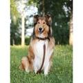 Nubuck dog lead - (Bergamo) 5