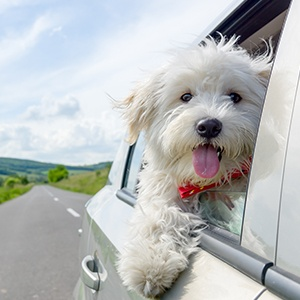 <strong>Experiences</strong>  Canine curated trips for you and your pet