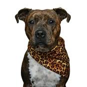 Pet Pooch Boutique - Dog Bandana - Leopard Print