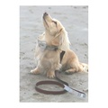 The Otis Sand Shetland Wool Leather Dog Lead 2