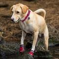Headwater Dog Collar – Alpenglow Pink  3