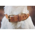 Leather Dog Collar (Trieste) - Light Tan 5