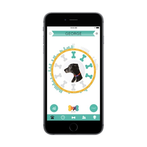Wonderwoof Bow Tie Activity Tracker – Teal 3