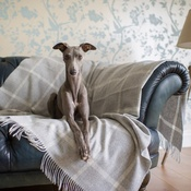 The Lounging Hound - Patterned Merino Wool Throw - Dusk