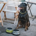 Nomad Pet Travel Bowls – Wasabi Green 4