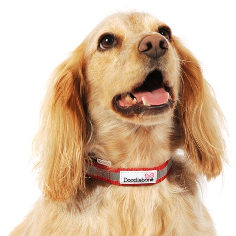 Bold Reflective Dog Collar – Red 4
