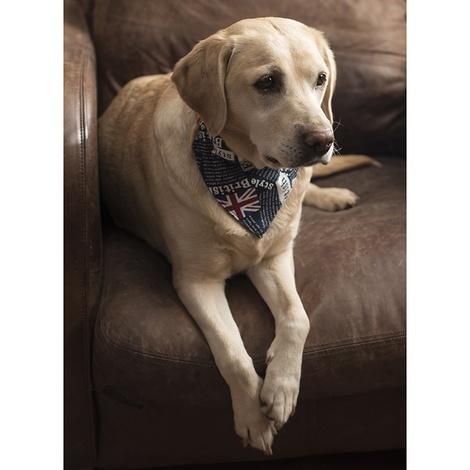 Union Jack Indiana Dog Bandana 5