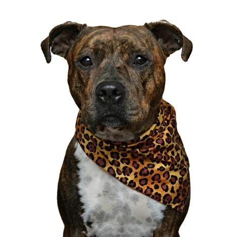 Dog Bandana - Leopard Print