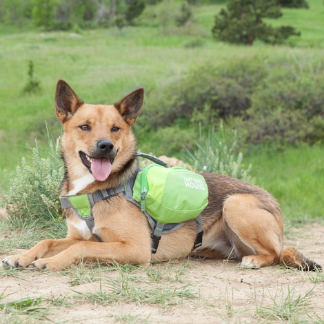 DayPak Backpack for Dogs - Green 2
