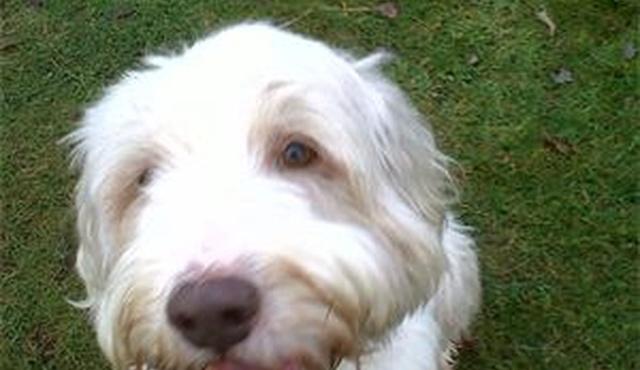 West Essex Pet Care 3