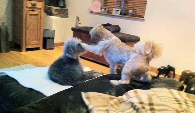 Posh Pooch Luxury Small Dog Hotel 4