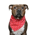 Polka Dot Dog Bandana - Red  3