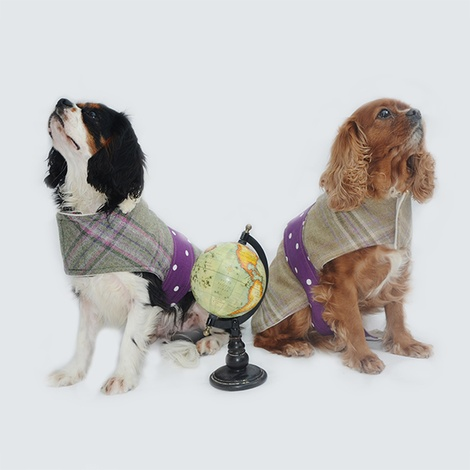 Belle Tweed Dog Coat