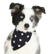 Pet Pooch Boutique - Navy Blue Star Bandana