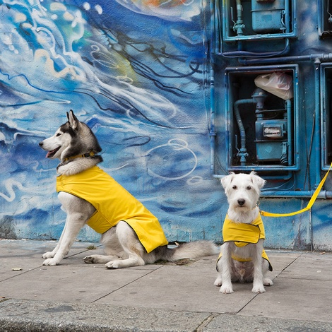 Pawditch Yellow Dog Collar, Lead & Coat Set  2