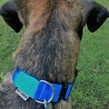 K9CREW COBRA Candy Collar (Blue) 4