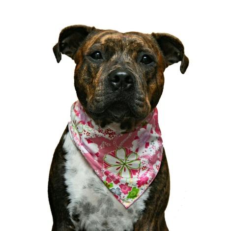 Lily Dog Bandana  3