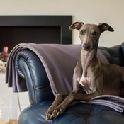 The Lounging Hound - Pure Wool Throw - Silvery Dusk