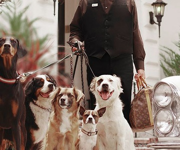 BE THE BEST CANINE HOST EVER
