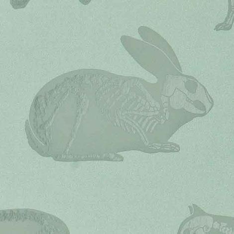 Animal Magic Wallpaper 7