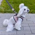 Soho Dog Harness - Rose 4