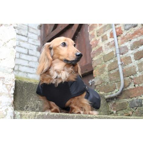 Dachshund Black Coat 2