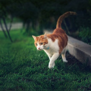 Don't panic! What to Do If Your Cat Goes Missing