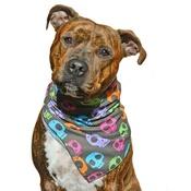 Pet Pooch Boutique - Disco Skulls Dog Bandana