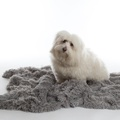 Shaggy Pet Blanket - Silver
