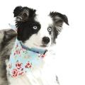 Blue Vintage Primrose Dog Bandana