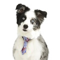 Anchors Away Dog Tie