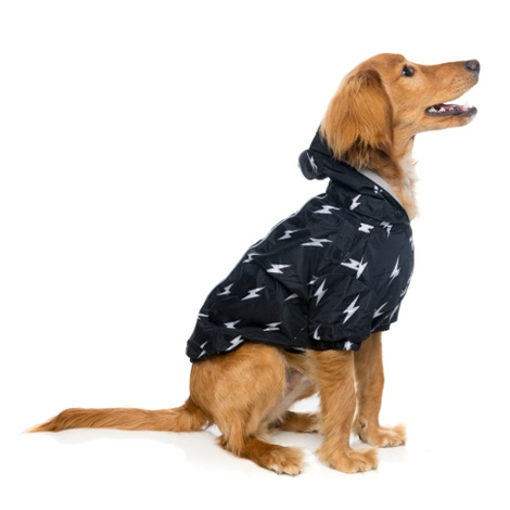 Bolt Dog Raincoat 2