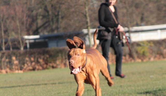 Chelsea Dog Walker 3