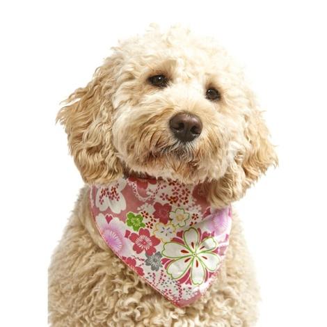Lily Dog Bandana